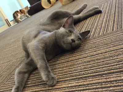 <お知らせ>猫カフェで猫に癒されました!@千葉