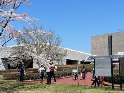 <お知らせ>桜満開の歴史博物館見学@千葉中央
