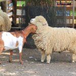 動物系実習2